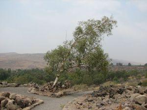 Bethsaide05